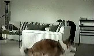 Enlace a Vaya perro más salido