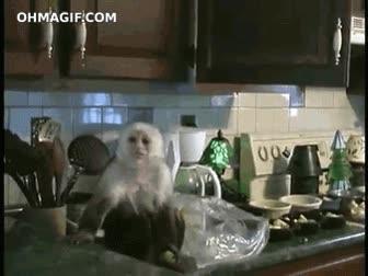 Enlace a ¡Tú! ¿Qué haces robando en mi cocina?