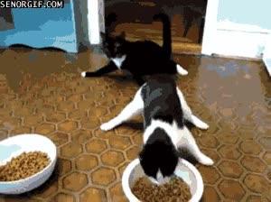 Enlace a Gatos después de una noche de fiesta