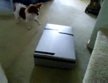 Enlace a Perros listos
