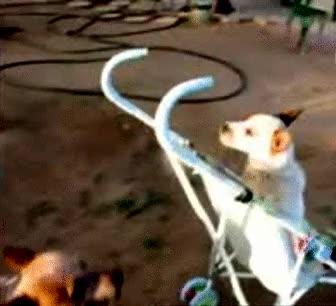 Enlace a Los perros se están modernizando