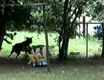 Enlace a Lo mejor que puedes hacer es enseñar a tu perro a pasar el cortacésped
