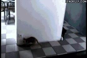 Enlace a jugando al escondite