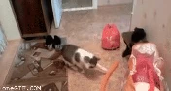 Enlace a Un gato curioso