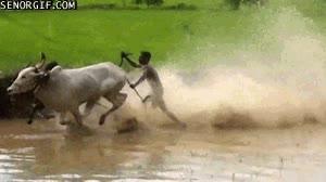 Enlace a Carreras de toros