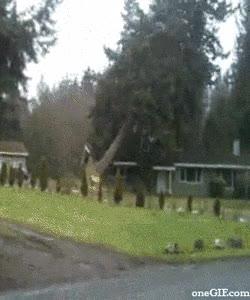 Enlace a Cómo no cortar un árbol