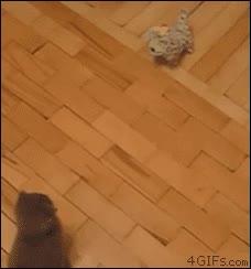 Enlace a Patada voladora al estilo gatuno
