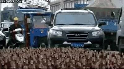 Enlace a Huelga de patos