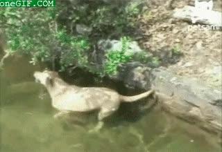 Enlace a Perro pescador