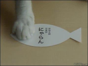 Enlace a Un día en la vida de un gato empresario