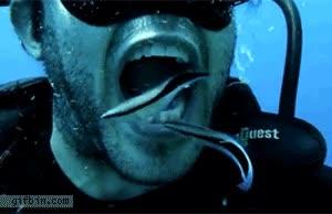 Enlace a Limpieza dental acuática