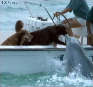 Enlace a Beso de delfín