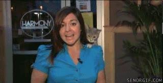 Enlace a ¿De dónde ha salido ese gato?