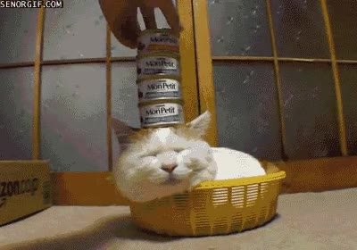 Enlace a Gato con paciencia infinita