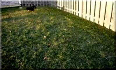 Enlace a Perro siguiendo su propia sombra