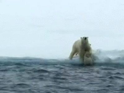 Enlace a Mamá oso ayudando a sus cachorros