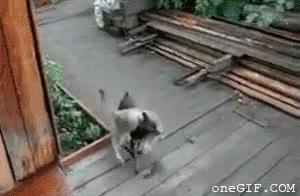 Enlace a Perro con complejo de mula