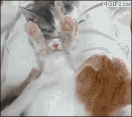 Enlace a Para que luego digan que los gatos no juegan al escondite