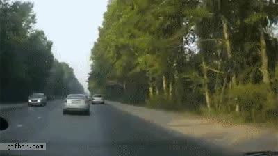 Enlace a ¡Mercedes se carga el bosque!