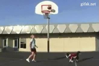 Enlace a Este perro va a la NBA