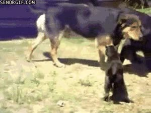 Enlace a Los perros justicieros