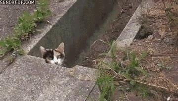 Enlace a ¡Mierda! me han visto fapeándome