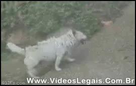 Enlace a Rascarse como un perro