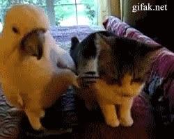 Enlace a Tranquilo, esa gata no era para ti