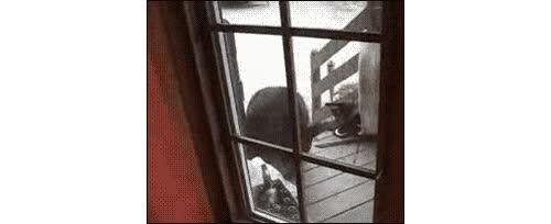 Enlace a El gato guardián