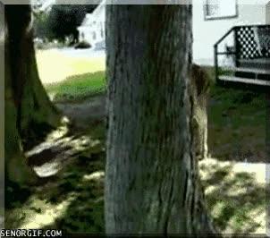 Enlace a Ciervo jugando al escondite