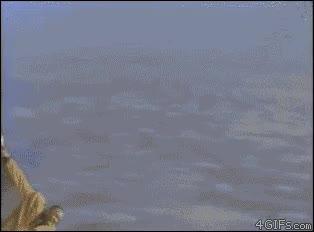 Enlace a A la mierda todo, yo quiero ser un avión
