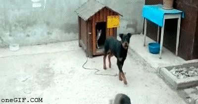 Enlace a A los perros les gusta compartir