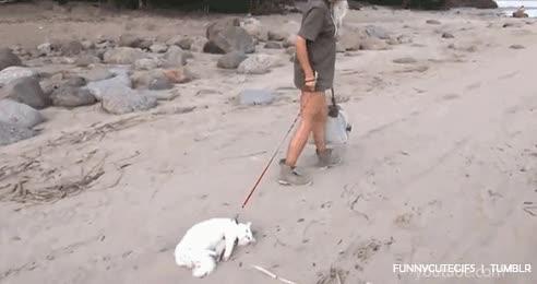 Enlace a Sacar a pasear al gato