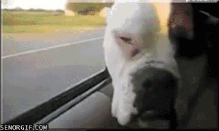 Enlace a Tomando el aire en el coche