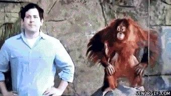 Enlace a Este orangután se está quedando contigo