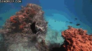 Enlace a Silla de ruedas acuática