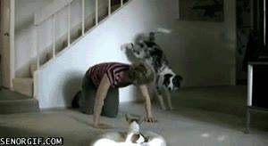 Enlace a Haciendo ejercicio con el perro