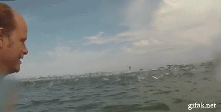 Enlace a Los peces nos invaden