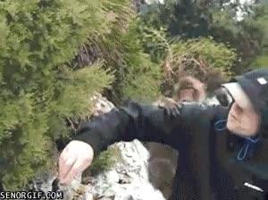 Enlace a Monos locos