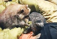 Enlace a Amor entre especies