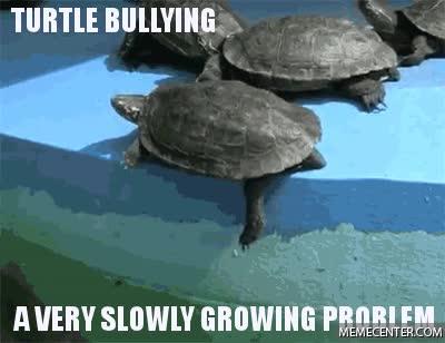 Enlace a Las tortugas también tienen sus problemas