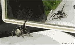 Enlace a Araña en el espejo