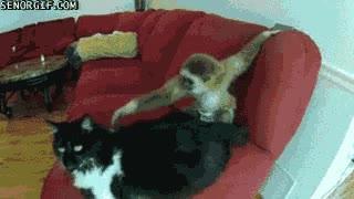 Enlace a Molestando al gato
