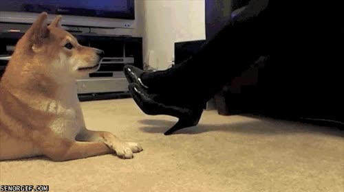 Enlace a Perro imitando a su dueño