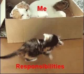 Enlace a Yo vs Responsabilidades