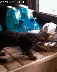 Enlace a La curiosidad, el eterno problema de los gatos
