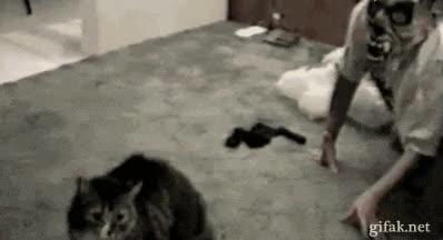 Enlace a La venganza del gato será terrible