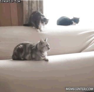 Enlace a ¡Fuera de mi sofá, gato!