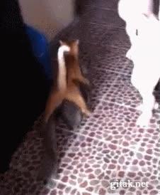 Enlace a ¿Pero qué hace este gato?