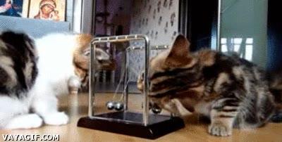 Enlace a Gatos aprendiendo física